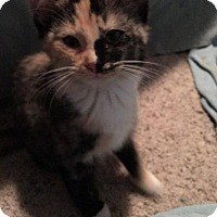 Adopt A Pet :: Sissy - West Des Moines, IA