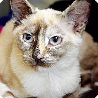 Adopt A Pet :: Anabel - Dublin, CA