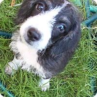 Adopt A Pet :: Saguaro - Tucson, AZ