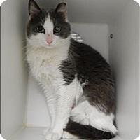 Adopt A Pet :: Gena - Topeka, KS