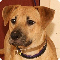 Adopt A Pet :: Pretzel - McDonough, GA