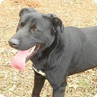 Adopt A Pet :: Terry - Salisbury, NC