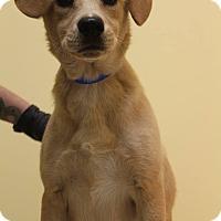 Adopt A Pet :: Maxamillion - Waldorf, MD