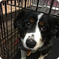 Adopt A Pet :: Bubba - Parker, KS