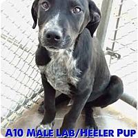Adopt A Pet :: Oakley - Staunton, VA