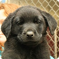 Adopt A Pet :: Okieo (Red Collar) - Fort Madison, IA