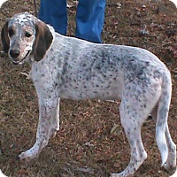 Adopt A Pet :: Freckles - Maynardville, TN