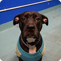Adopt A Pet :: Maribel - Ridgefield, CT