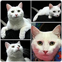 Adopt A Pet :: Snowflake - Forked River, NJ
