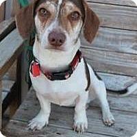 Adopt A Pet :: Casper - Yukon, OK