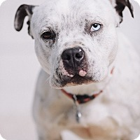 Adopt A Pet :: Ursula - Portland, OR