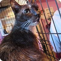 Adopt A Pet :: Gabby - Coos Bay, OR