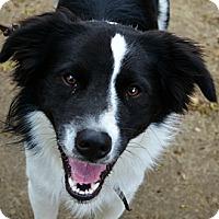 Adopt A Pet :: Tadhg - Bellevue, NE
