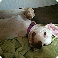 Adopt A Pet :: Lucas - Louisville, KY