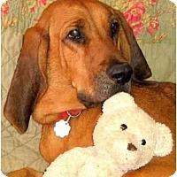 Adopt A Pet :: MEAGAN - Wakefield, RI