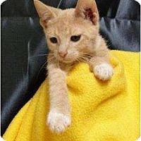 Adopt A Pet :: Crash - Orlando, FL