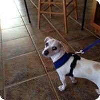Adopt A Pet :: Minnie Pearl - Scottsdale, AZ