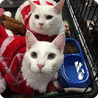 Adopt A Pet :: Knack - Harrisburg, NC