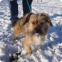 Adopt A Pet :: Bennie - Meridian, ID