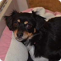 Adopt A Pet :: Zoe - Broomfield, CO