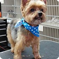 Adopt A Pet :: TONY - Boca Raton, FL