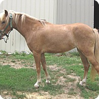Adopt A Pet :: Sadie - Dewey, IL