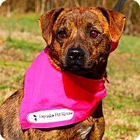 Adopt A Pet :: Lovey~30 lbs~ - Glastonbury, CT
