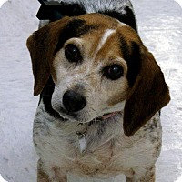 Adopt A Pet :: Lottie - Garfield Heights, OH