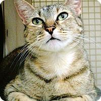 Adopt A Pet :: Ember - Bonita Springs, FL