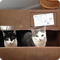 Adopt A Pet :: Winona - Philadelphia, PA