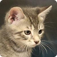 Adopt A Pet :: Donald - Grants Pass, OR