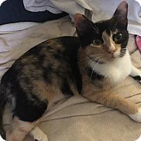 Adopt A Pet :: Charlene - Garland, TX