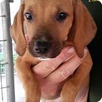 Adopt A Pet :: Cyclops - Gainesville, FL