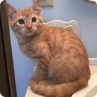 Adopt A Pet :: Sunny (& Rowan) - Herndon, VA