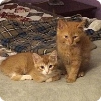 Adopt A Pet :: Skittles (right) - Jackson, NJ
