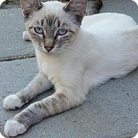 Adopt A Pet :: Lilac - Lodi, CA