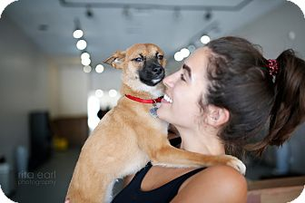 Terrier (Unknown Type, Small)/Terrier (Unknown Type, Small) Mix Puppy for adoption in Sherman Oaks, California - Muna