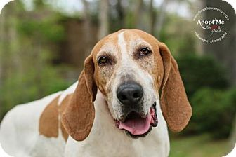 Hound (Unknown Type) Dog for adoption in Cincinnati, Ohio - Cash