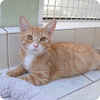 Adopt A Pet :: Gator - Van Nuys, CA