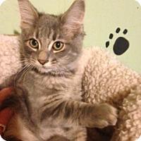 Adopt A Pet :: Ralph - Bridgeton, MO