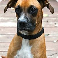 Adopt A Pet :: Tyson - Mt. Prospect, IL