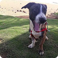 Adopt A Pet :: Piwi - Elmsford, NY