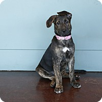 Adopt A Pet :: Molly - San Antonio, TX