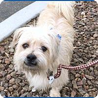 Adopt A Pet :: Toots - Phoenix, AZ