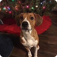 Hound (Unknown Type) Mix Dog for adoption in Lake Charles, Louisiana - Vinny