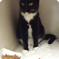 Adopt A Pet :: Sister - Westminster, CA