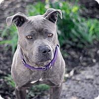 Adopt A Pet :: Gem - Berkeley, CA