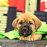 Adopt A Pet :: Gamora - Scarborough, ME