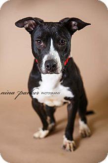 Pit Bull Terrier/Terrier (Unknown Type, Medium) Mix Dog for adoption in Marietta, Georgia - Davetta