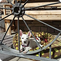 Adopt A Pet :: Princess - Spanish Fork, UT